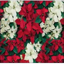 Herlitz - Karácsonyi csomagoló 2mx70cm, tekercses, mikulás virágos - Partykellékek, csomagolóanyagok - Ünnepi meglepik