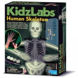 4M Emberi csontváz készlet - KIDZ Labz játékok - KIDZ Labz játékok 4M